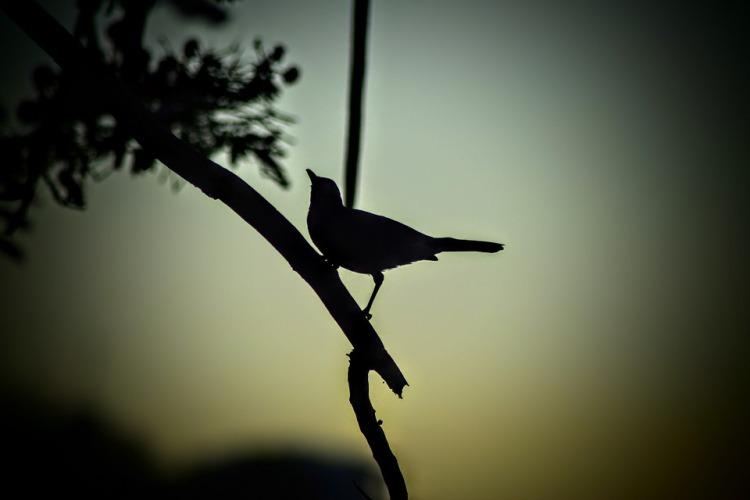 bird-1224912_960_720